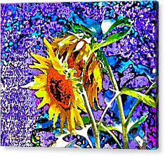 Beautiful And Bright Sunflowers Acrylic Print by Annie Zeno
