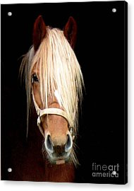 Beautiful Bella Acrylic Print