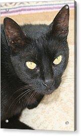 Beautiful Black Cat Portrait  Acrylic Print by Tracey Harrington-Simpson