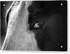 Beautiful Blind Soul Horse Acrylic Print by Peggy Franz