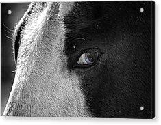 Beautiful Blind Soul Horse Acrylic Print