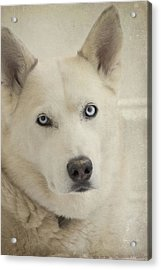 Beautiful Blue Eyes Acrylic Print by Cindy Rubin