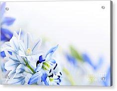 Beautiful  Blue Flower Art Acrylic Print
