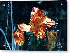 Acrylic Print featuring the photograph Gorgeous Tulip by Phyllis Kaltenbach