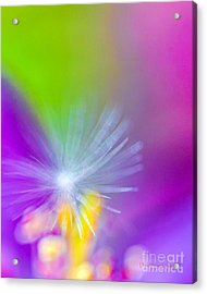 Beautiful Blur Acrylic Print