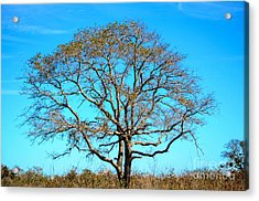 Acrylic Print featuring the photograph Beautiful Branching by Debra Martz