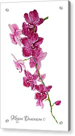 Beautiful Burgundy Orchid Flower Original Floral Painting Pink Orchid I By Megan Duncanson Madart Acrylic Print by Megan Duncanson