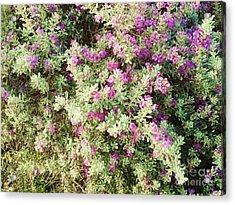 Beautiful Bush Acrylic Print by Esther Rowden