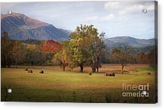 Beautiful Cades Cove Acrylic Print