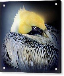 Beautiful Dreamer Acrylic Print by Karen Wiles