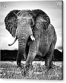 Beautiful Elephant Black And White 33 Acrylic Print by Boon Mee