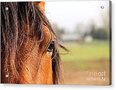 Beautiful Eye Acrylic Print