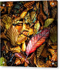Beautiful Fall Color Acrylic Print by Meirion Matthias