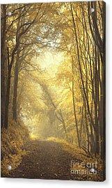 Beautiful Fall Acrylic Print by Evelina Kremsdorf