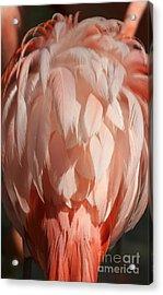 Beautiful Feathers Acrylic Print