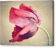 Beautiful Flower Acrylic Print by Diana Kraleva