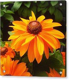 Beautiful Flower #iphone5 #instagram Acrylic Print