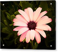 Beautiful Flower  Acrylic Print