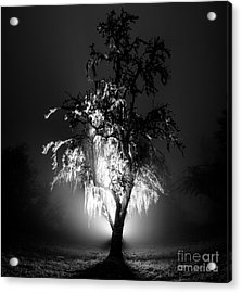 Beautiful Foggy Night 1 Acrylic Print