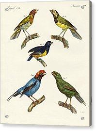 Beautiful Foreign Birds Acrylic Print by Splendid Art Prints