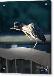 Acrylic Print featuring the photograph Beautiful Green Heron by Anita Oakley