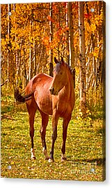 Beautiful Horse In The Autumn Aspen Colors Acrylic Print by James BO  Insogna