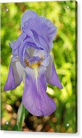 Beautiful Iris Acrylic Print