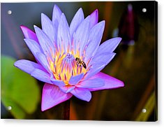 Beautiful Lily And Visiting Bee Acrylic Print by Kristina Deane