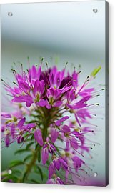 Acrylic Print featuring the photograph Beautiful Morning by Kevin Bone