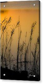 Beautiful Nature Acrylic Print