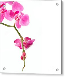 Beautiful Orchids Acrylic Print by Boon Mee