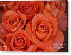 Beautiful Peach Roses 2 Acrylic Print by Carol Lynch