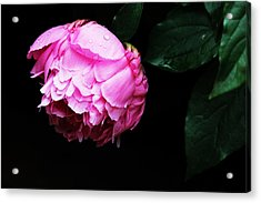 Beautiful Peony Acrylic Print by Trina  Ansel