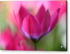 Beautiful Pink Acrylic Print