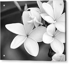 Beautiful Plumeria In Black And White Acrylic Print