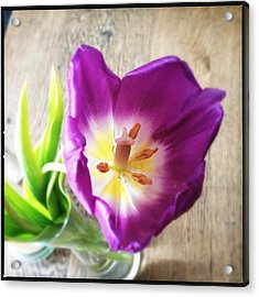 Beautiful Purple Flower From Above Acrylic Print