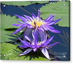 Acrylic Print featuring the photograph Beautiful Purple Lilies by Chrisann Ellis