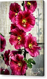 Beautiful Red Hollyhock Acrylic Print by Robert Bales