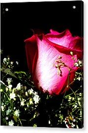 Beautiful Rose Acrylic Print by Elizabeth Fredette