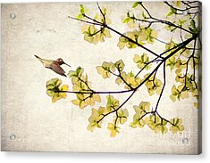 Beautiful Spring Acrylic Print by Darren Fisher