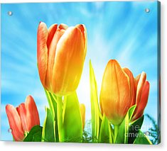Beautiful Spring Tulips Background Acrylic Print by Michal Bednarek