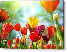 Beautiful Spring Tulips Acrylic Print by Boon Mee