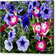 Acrylic Print featuring the photograph Beautiful Summer Annuals by Wilma  Birdwell