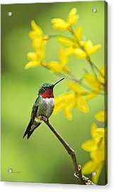 Beautiful Summer Hummer Acrylic Print