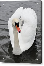 Acrylic Print featuring the photograph Beautiful Swan by Tiffany Erdman