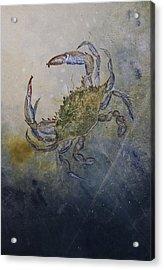 Beautiful Swimmer Acrylic Print by Nancy Gorr