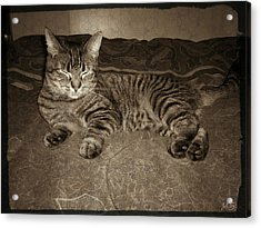 Beautiful Tabby Cat Acrylic Print by Absinthe Art By Michelle LeAnn Scott
