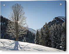 Beautiful Tree In Snowy Landscape On A Sunny Winter Day Acrylic Print by Matthias Hauser