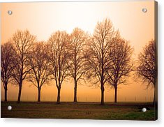 Beautiful Trees In The Fall Acrylic Print by Tommytechno Sweden