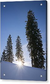 Beautiful Trees On A Sunny Winter Day Acrylic Print by Matthias Hauser